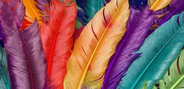 birds-feathers-600x290